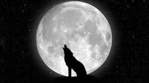 Black And White Wolf Wallpaper Fantasy Wolf And Moon