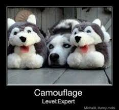 Husky Jokes on Pinterest | Dog Jokes, Pewdiepie And Cry and Husky ... via Relatably.com
