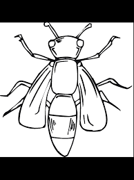 liberal firefly coloring page top 82 insect pages free