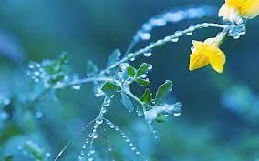 Dew Drops - Dew, Drop, Droplet ...