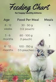 Kitten Feeding Chart Feeding Your Kitten