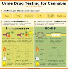 How Long Does Marijuana Stay In System Chart Guide To Urine Drug Testing For Marijuana With Infographic