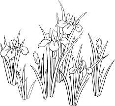 花のイラストフリー素材白黒モノクロno057白黒水仙