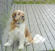 dog kennel flooring