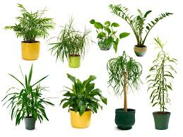 choosing house plants