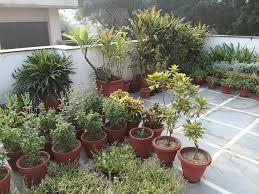 Small Picture Balcony Gardening Ideas India Best Balcony Design Ideas Latest