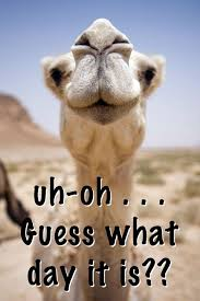 Hump Day Quotes Awesome Happy Hump Day Quotes Hump Day Humor Pinte