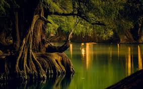 nature landscape lake forest water reflection trees roots calm mexico wallpaper and background