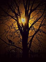 Moonlight Tree Lighting Download Free Photo Of Moonlight Tree Night Moon Mystical