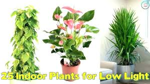 lighting for houseplants. Up Lighting For Indoor Plants Good Bedroom Low Light The  Bathroom With No Houseplants R
