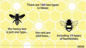 Bee Identification Chart Uk Bees Its Not All About Honey For Wales 180 Varieties