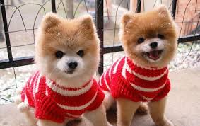 cute christmas puppies. Simple Cute Puppy4 To Cute Christmas Puppies Y
