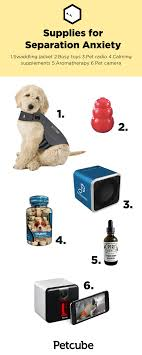 anxiety toys for dogs.  Toys Supplies To Help With Separation Anxiety In Anxiety Toys For Dogs A