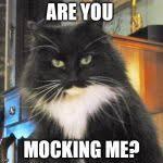 Gwen the evil cat Meme Generator - Imgflip via Relatably.com