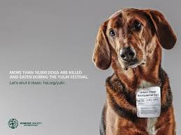 humane society ads. Beautiful Ads Player Error In Humane Society Ads T