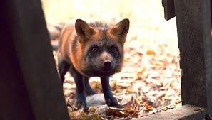 Image result for the fox in anne series 2017