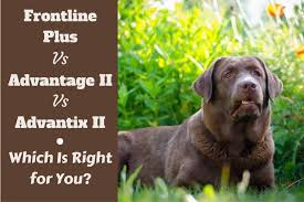 Flea Medicine For Dogs K9 Advantix Frontline Advantage