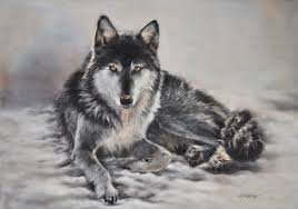 grey wolf size billy black phase grey wolf wolf portraits