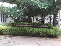 top 100 roof gardening services in sanjay nagar best rooftop gardening services bangalore justdial