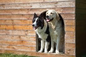 Tips for Building a <b>Winter Dog</b> Shelter | Winnipeg Humane Society