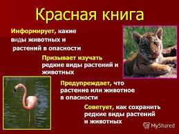 красной книги фото и название растения красной книги фото и название