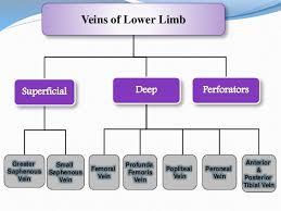 Venous Blood Flow Chart Venous Drainage Of Lower Limb Ppt