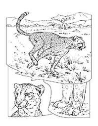 Small Picture caracal coloring pages caracal colouring pages page 2 Kyles