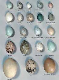 Egg Wild Birds Pet Birds Bird Egg Identification
