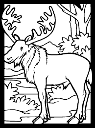 Small Picture Color Moose1 Animals Coloring Pages Coloring Book
