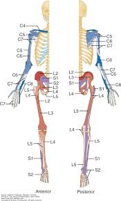 Ama Guides Upper Extremity Conversion Chart Musculoskeletal Examination Physical Rehabilitation 6e