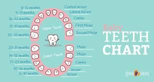 Teething Chart For Babies Teeth Chart Babies Rome Fontanacountryinn Com