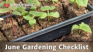 organic gardening blog organic gardening advice organic gardening s how to garden organically how to grow organic food