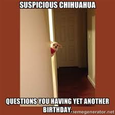 Suspicious Chihuahua is leary of your claims on cl - suspicious ... via Relatably.com