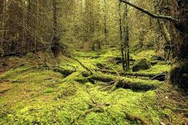 zoo med forest floor mossy by and pray zoomed bedding for ball python