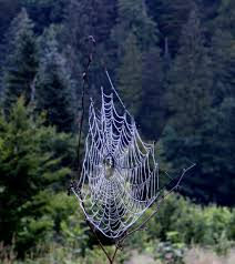 How To Make A Spider Web Dream Catcher Free Images landscape nature forest branch leaf mystical 91