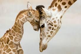 Resultado de imagem para imagens de carinho entre animais