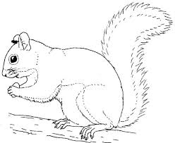 Flying Squirrel Coloring Pages New Squirrel Coloring Page Image