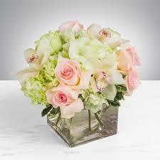 elegant by bloomnation