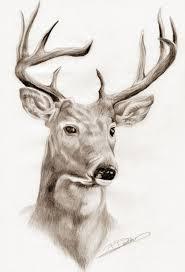 Pin By Mickey Lou On Wicca Pencil Drawings Drawings Deer Drawing