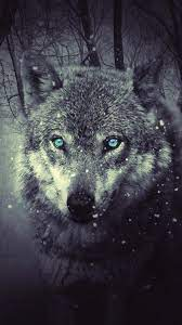 Black Wolf iPhone Wallpaper (Page 1 ...