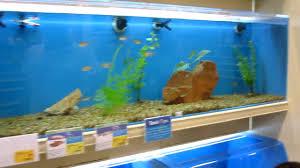 petsmart fish tanks. Perfect Petsmart YouTube Premium And Petsmart Fish Tanks