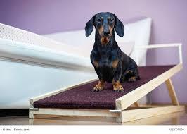 Ich habe gehoert dass dackel keine treppen steigen sollen wegen ihrer langen wirbelsauele. Treppenhilfen Fur Hunde Gibt Es Mehr Ausser Rampen Haustiermagazin