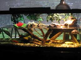 Turtle Tank Decor 55 Gallon Tank With 10 Gallon Basking Area For My African Sideneck