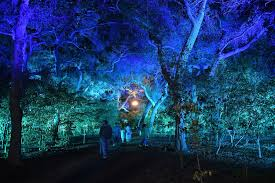 Enchanted Forest Of Lights Descanso Lightswitch And Elation Lighting Magic At Descanso Gardens