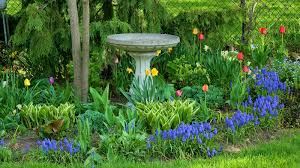 gardening tips spring bulbs