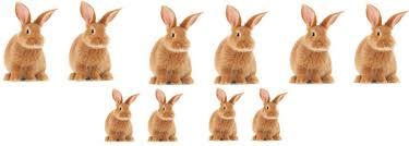Resultado de imagem para rabbits