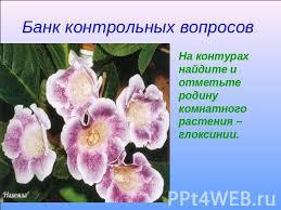 Презентация на тему В мире комнатных растений скачать  Банк контрольных вопросов На контурах найдите и отметьте родину комнатного растения глоксинии