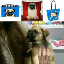 pug gifts at twowoofs co uk