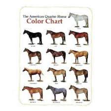 Foal Color Chart Horse Colors And Temperaments Experiment Poll