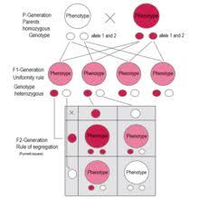 Mendelian Genetics Chart Mendelian Inheritance Wikipedia